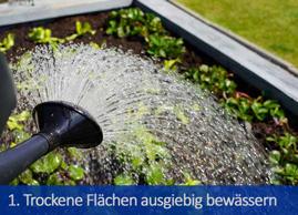 1. Trockene Fläche ausgiebig bewässern